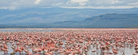 13 days-lake-bongoria-lake-nakuru-maasai-mara-lake-naivasha-amboseli-tsavo-west-voyanger1
