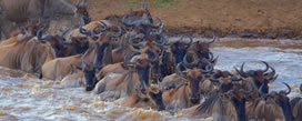 13 days-lake-bongoria-lake-nakuru-maasai-mara-lake-naivasha-amboseli-tsavo-west-voyanger2