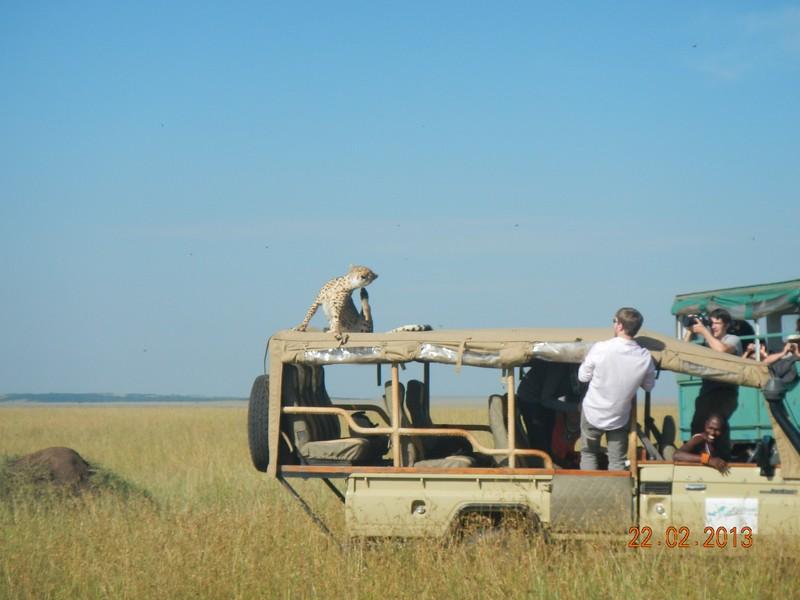Kenya Safari 7 Days Samburu, Aberdare, Lake Nakuru and Masai Mara Safari