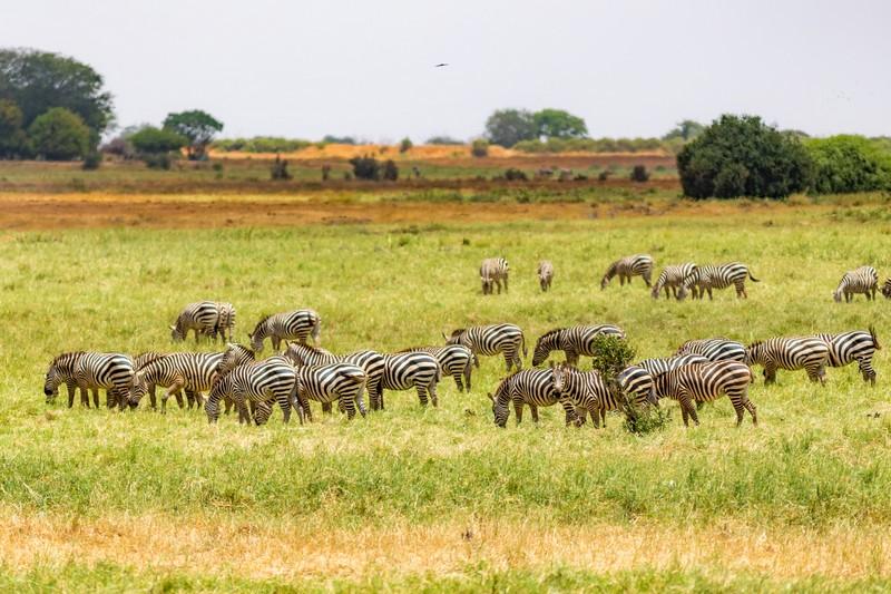 Kenya Safaris 5 Days Tsavo East, West, Amboseli & Saltlick.