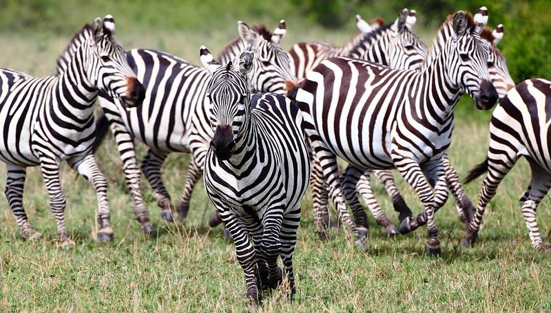 Kenya Safaris 13 Days (12 Nights): Kenya Safari