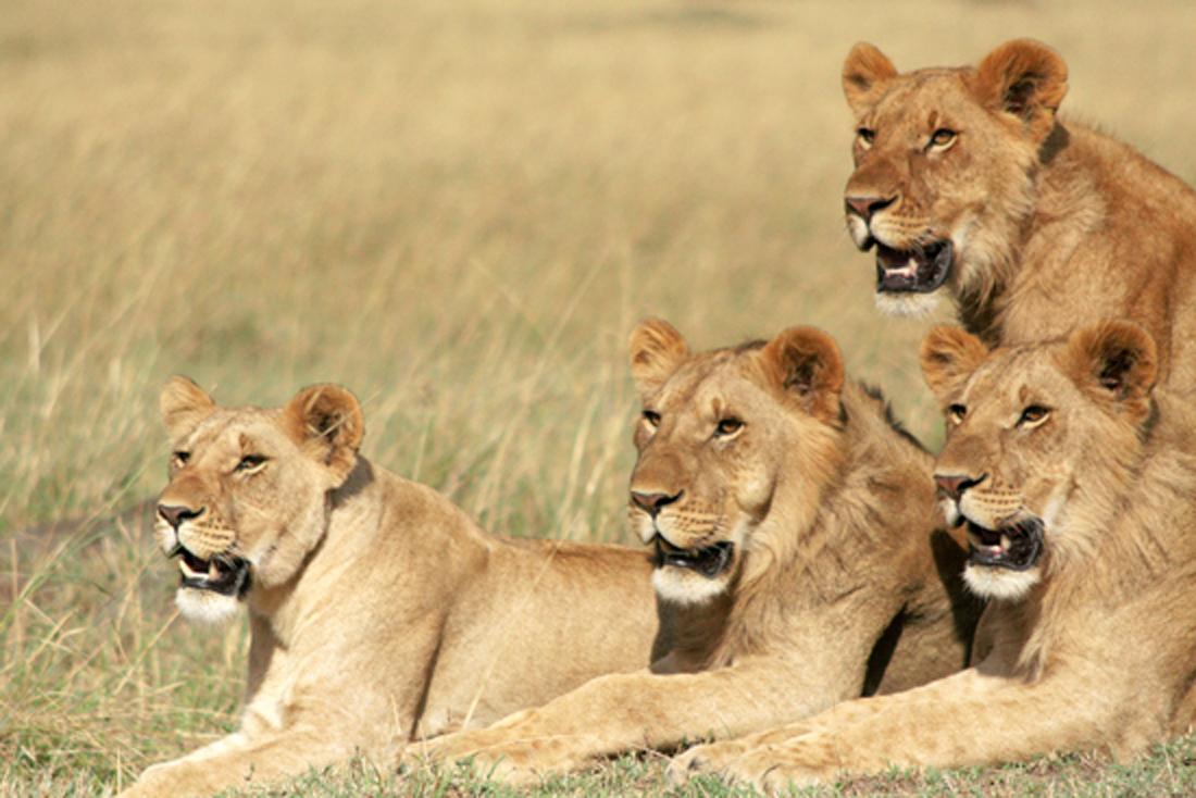 Kenya Safaris 5 Days Amboseli, Tsavo West And Tsavo East